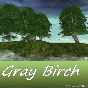 Tree - Gray Birch