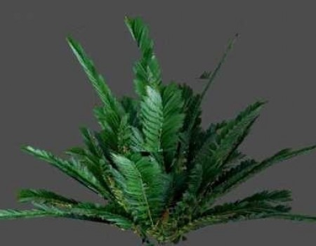 20 High-res Plants