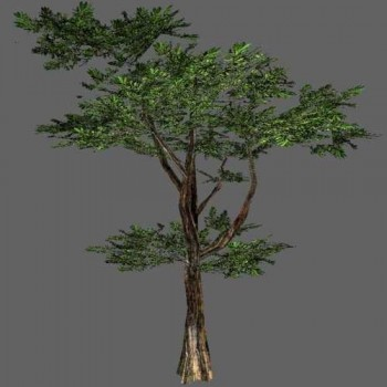 7 high-res Trees