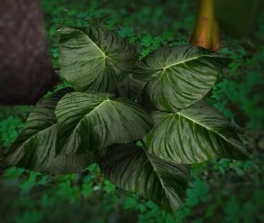 Big Leafed Plant