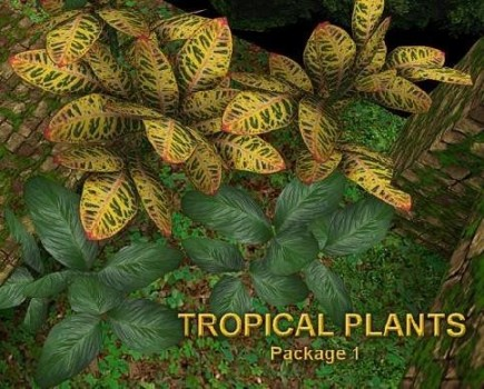 Tropical package 1