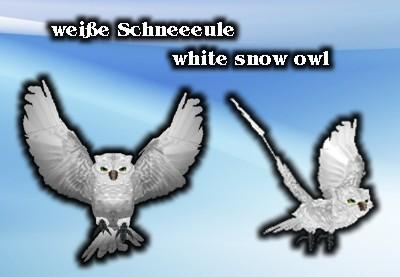 White snow owl