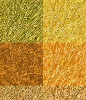 Dry Grass Textures