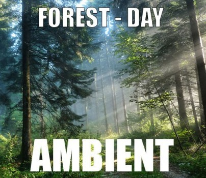 Ambient track - Forest : Day